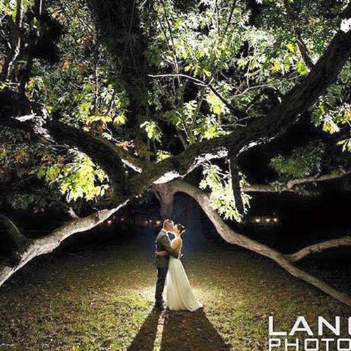newlyweds under tree